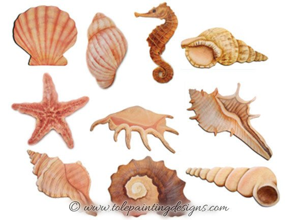 Seashells Beginner Painting Pattern
